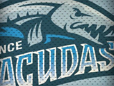 Barracudas barracuda sports sports logo sports identity