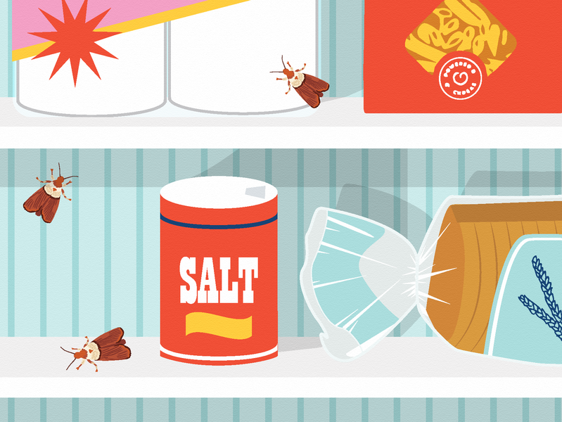 Pantry Moths Bug Pasta Banza Bread Salt Food Pests Moth Bugs Editorial Illustration For Apartment Therapy