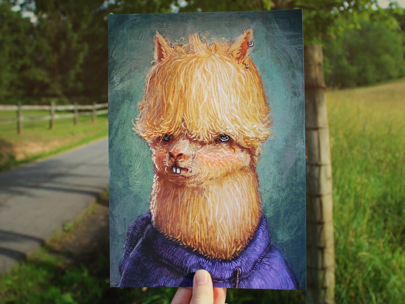 Grumpy Alpaca ronan lynam animals digital painting print photoshop portrait editorial illustrator illustration