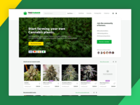 Cannabis Seed Shop And Community Forums