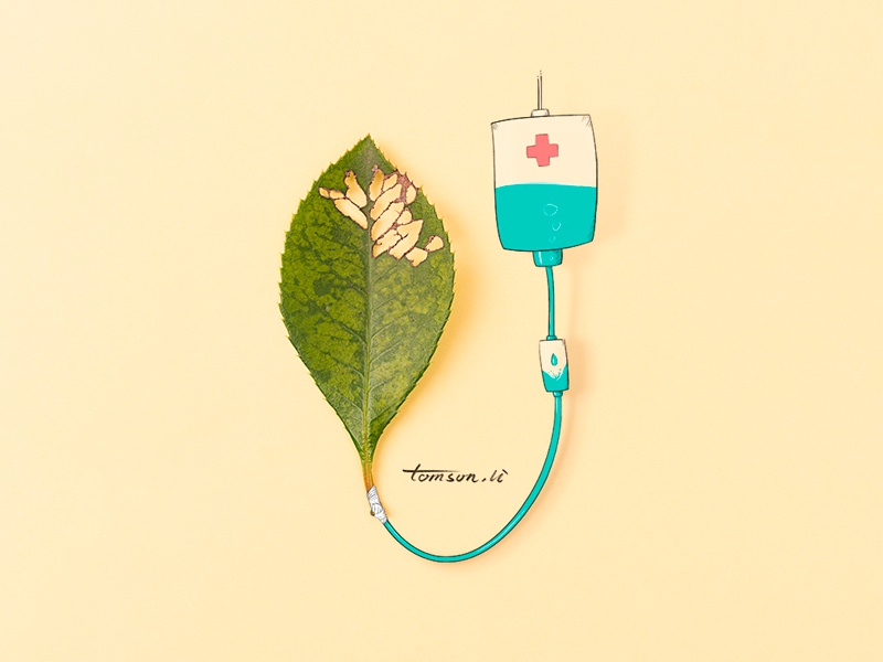 cure medical yellow leaves still life photography illustration painting drawing creative