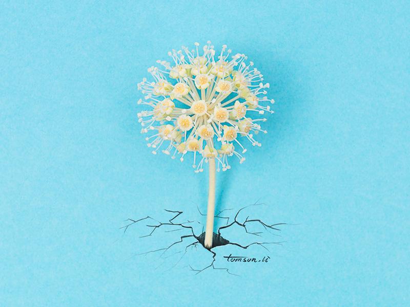stubborn flower crack breakdown rock still life photography creative illustration painting drawing stubborn