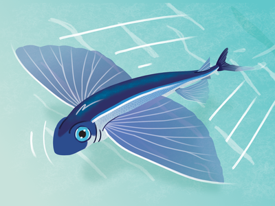 Flying fish water wildlife nature animal green blue bird vector illustraion ocean sea flying fish
