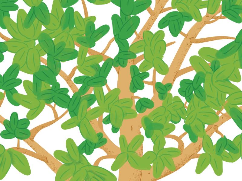 Mangrove Tree WIP leaves vector green texture jungle wild nature swamp wip tree mangrove