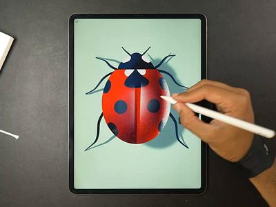Ladybug drawing ladybug icon illustration