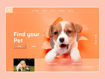 Pet Web Design uidesign new latest designs eclean art design web ux ui