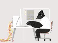 Gorilla Gorilla!