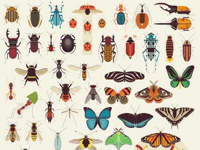 Insects insects science childrens folioart digital illustration