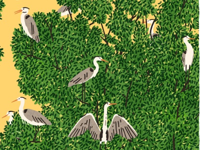 Heron Island michael parkin character birds nature folioart digital illustration
