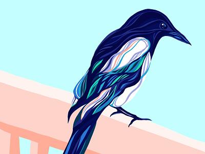 Procreate illustration drawing digital procreate ipad apple bird magpie