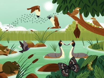 What Do Animals Do All Day? digital childrens publishing book illustration wildlife nature animals