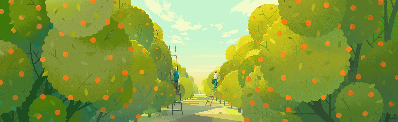 Colin bigelow folio illustration landscape farm organic oranges nature tbrand tropicana header