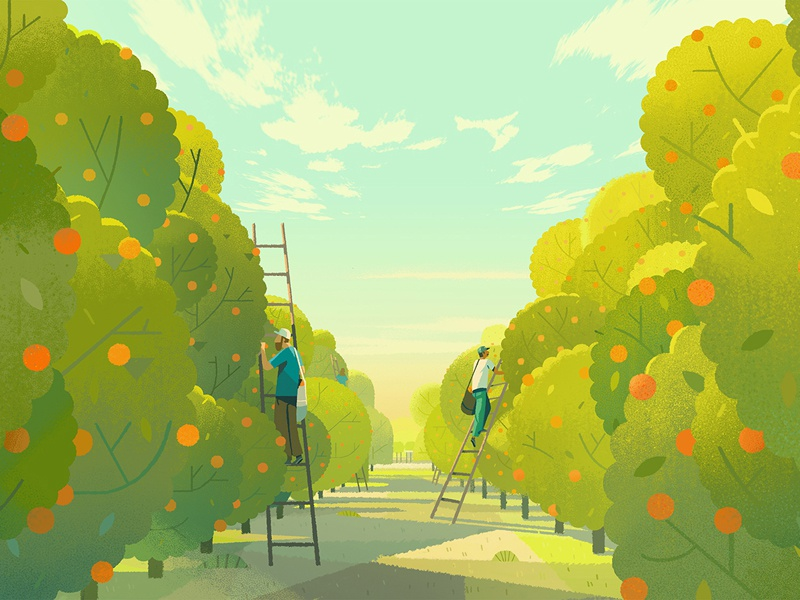 Orange Trees agriculture advertising trees orange farming people illustration digital landscape