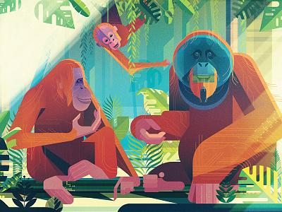 Orangutans gilleard james folioart nature jungle animals publishing book digital illustration