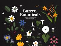 Sally caulwell folio illustration burren 1 botanicals floral flowers