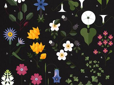 Botanicals folioart sally caulwell vector botanical floral poster infographic illustration