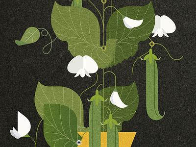 Sweet Peas sally caulwell book recipe veg plant vector folioart digital illustration