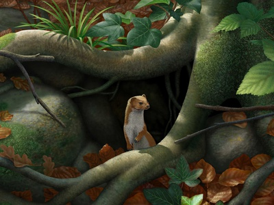 Beech Roots anne sharp wildlife weasel nature woodland folioart painting digital illustration