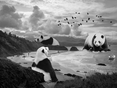 Panda Beach