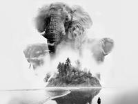 Elephantsd in the Mist
