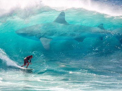 Surfing with a Giant Shark