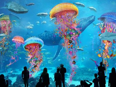 JellyfishAquariumworlds