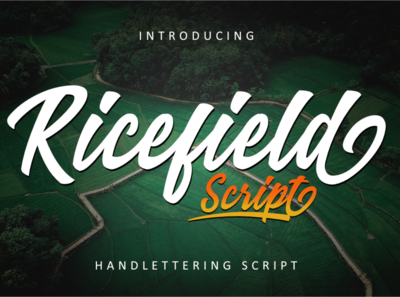 Ricefield Script Font