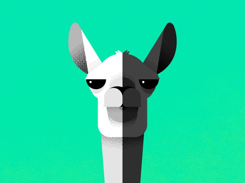 Never Forget arizona black and white llamas illustration chase
