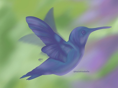 Humming Bird procreate illustration branding brand design illustrator