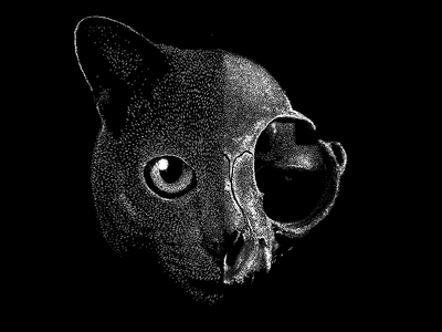 Schrödinger's cat quantum mechanics cat schrödinger