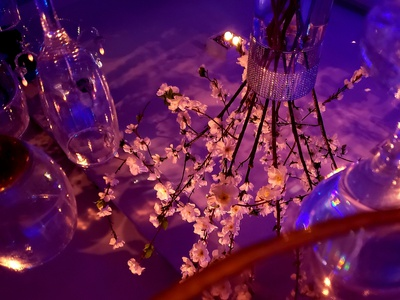 Mirrored flowers mirrored mirror decoration reflection glass purple pink flower shot photo photography