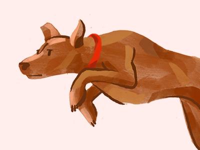 Sawyer illustration procreate kangaroo pupper pup dog