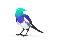 Polygonal magpie