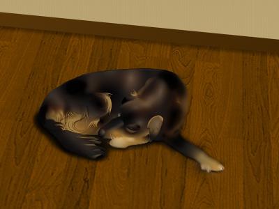 Dog dog illustration