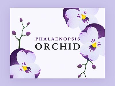 Orchid design graphic purple illustration flower phalaenopsis orchid