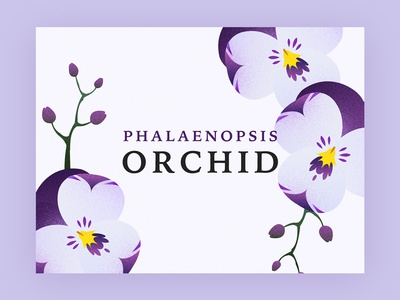 Orchid design graphic purple illustration flower phalaenopsis orchid
