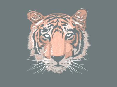 Tiger Head Illustration ipad pro animal tiger portrait adobe fresco artwork apoka edouard artus illustration