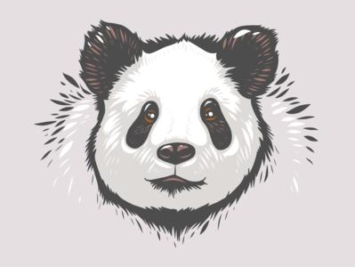Panda head Illustration black white grey panda adobe fresco animal vector animals ipad pro portrait apoka artwork edouard artus illustration