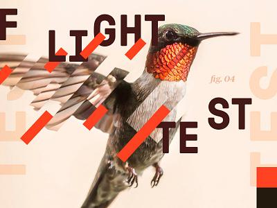 Flight Test chicago hummingbird wing test flight aiga poster bird