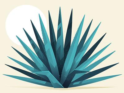 Agave desert leaves plant illustration tequila ageve