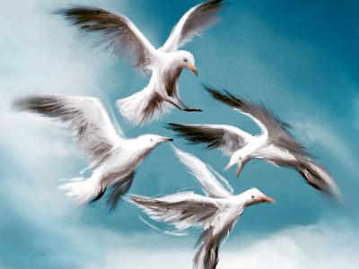 Gulls birds digital painting