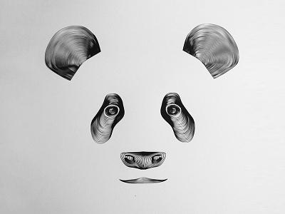 Panda panda illustration
