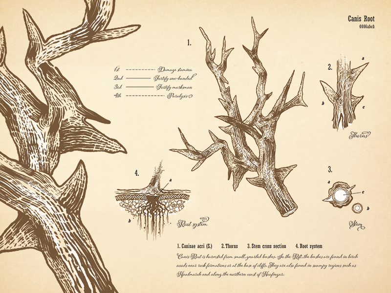 Canis Root Botanical Print vintage drawing canis root floral print scientific illustration typography vector botanical skyrim alchemy
