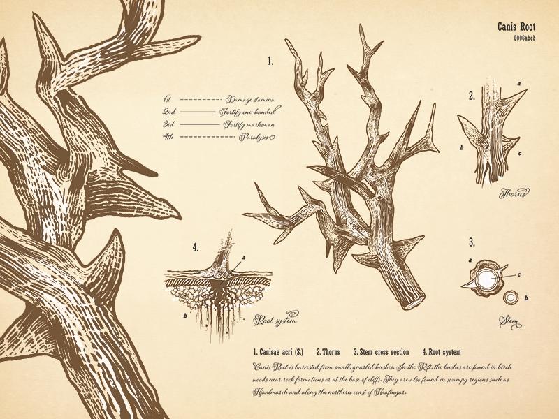 Canis Root Botanical Print by Matt Benson on Dribbble