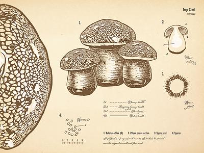 Mushroom Botanical Print vintage drawing imp stool mushroom print scientific illustration typography vector botanical skyrim alchemy