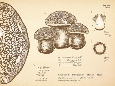 Mushroom Botanical Print