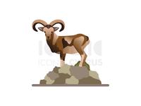 Cyprus Mouflon