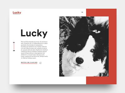 Lucky minimal clean red white design ux ui dog webdesign
