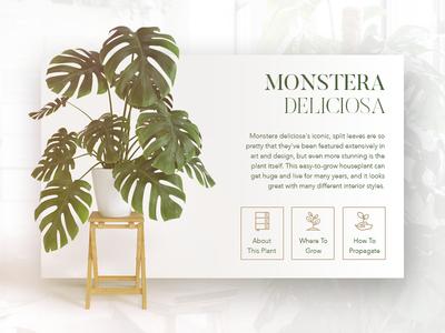 Plants - Information Card UI