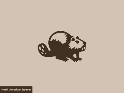 North American Beaver  3/24